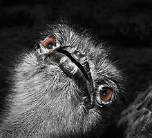 Ostrich Eyes by Craig Hender