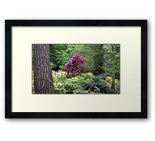 Richly Coloured Framed Print