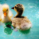 Ducklings by Annette Carr