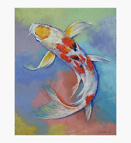 Butterfly Koi Fish Photographic Print