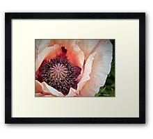 Poppy Love! Framed Print