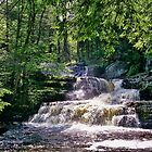 Woodland Waterfall  by Lanis Rossi