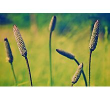 Meadow Dreams Photographic Print