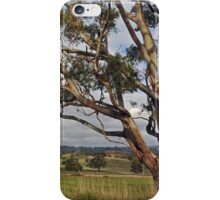 Old Gum Tree iPhone Case/Skin