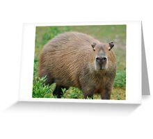A Cabybara Greeting Card