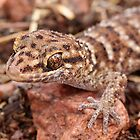 Bynoe's Prickly Gecko by EnviroKey