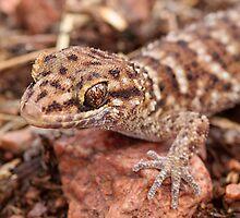 Bynoe's Prickly Gecko by EnviroKey