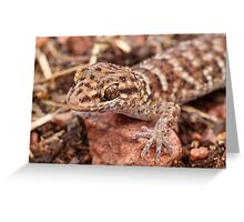 Bynoe's Prickly Gecko Greeting Card