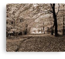 Autumn Woodland - Wrington, Somerset, England Canvas Print