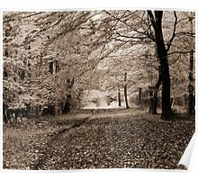 Autumn Woodland - Wrington, Somerset, England Poster
