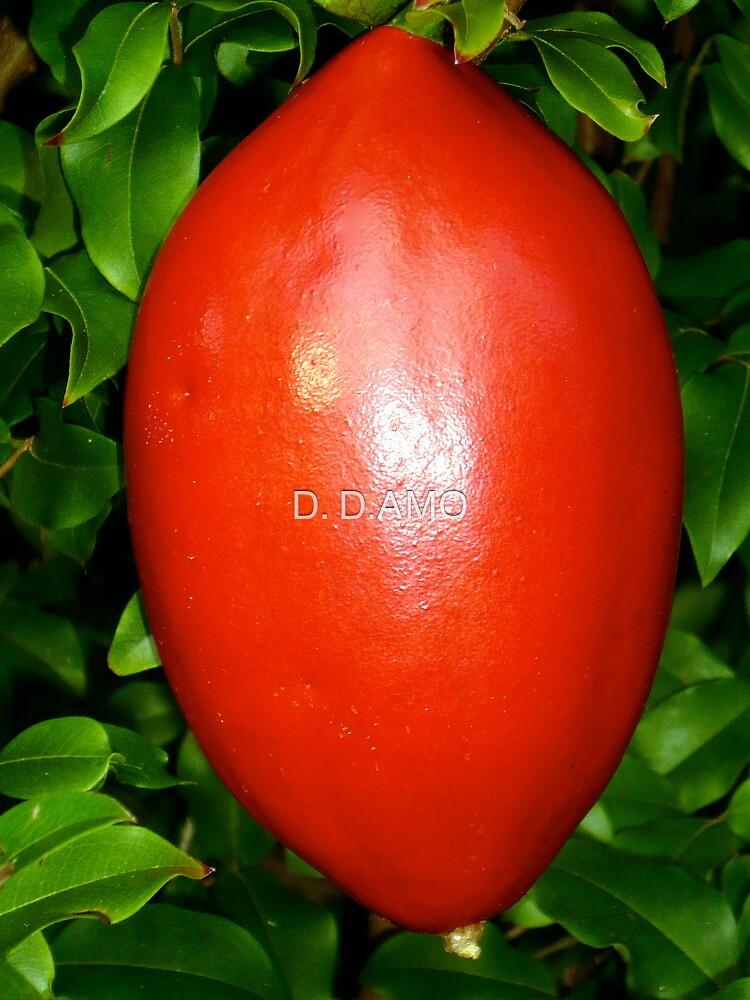 NON-Edible Red Passionfruit by D. D.AMO