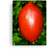 NON-Edible Red Passionfruit Canvas Print