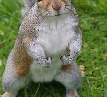 Mr. Squirrel by Sally Haldane