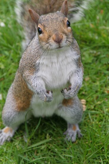 Mr. Squirrel by Sally Haldane