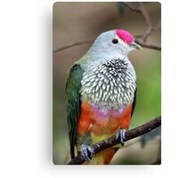 Rose-crowned Fruit Dove Canvas Print