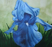 Blue Iris by Brent McMurry