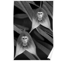 *•.¸♥♥¸.•* MONKEY ORCHID *•.¸♥♥¸.•* Poster