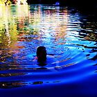 Blue Swimming - Karijini  by Dennison