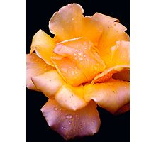 rose in the rain... #2 Photographic Print