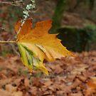 Golden leaf by Luís Lajas