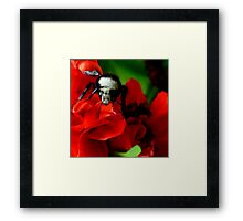 Beeing Very Colorful Framed Print
