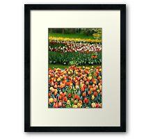 Keukenhof, Holland - V Framed Print