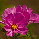 Pink Flower by David Freeman