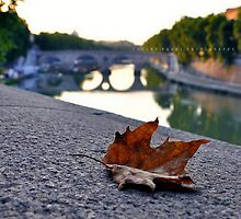 Serenity on the River's bank by VioletKashi