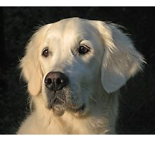 Portrait of my Golden Retriever Ditte Photographic Print