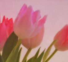 Tulips by George Swann