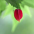 garden spirit by Iris MacKenzie