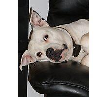 dog tired. Photographic Print