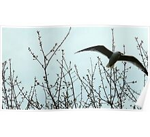 Gull Flying Along Maine Coast at Kennebunkport  Poster