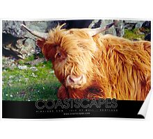 Here's Looking At You - Highland Cow Photograph Poster