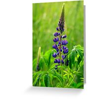 Lone Lupin Greeting Card