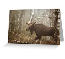 Maine Bull Moose During Mating Season... Greeting Card