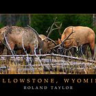 Yellowstone, ©2010 Roland Taylor by Roland Taylor
