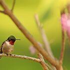 Jewel of the Bird World by Debbie  Roberts