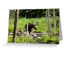 Bull Moose In Western Maine Greeting Card