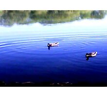 Ha And He thinks That's The Right Way-Duck Troubles Photographic Print