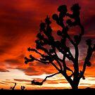 Joshua Tree at Sunset by Sam Scholes