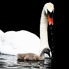 Swan Dripping by snapdecisions