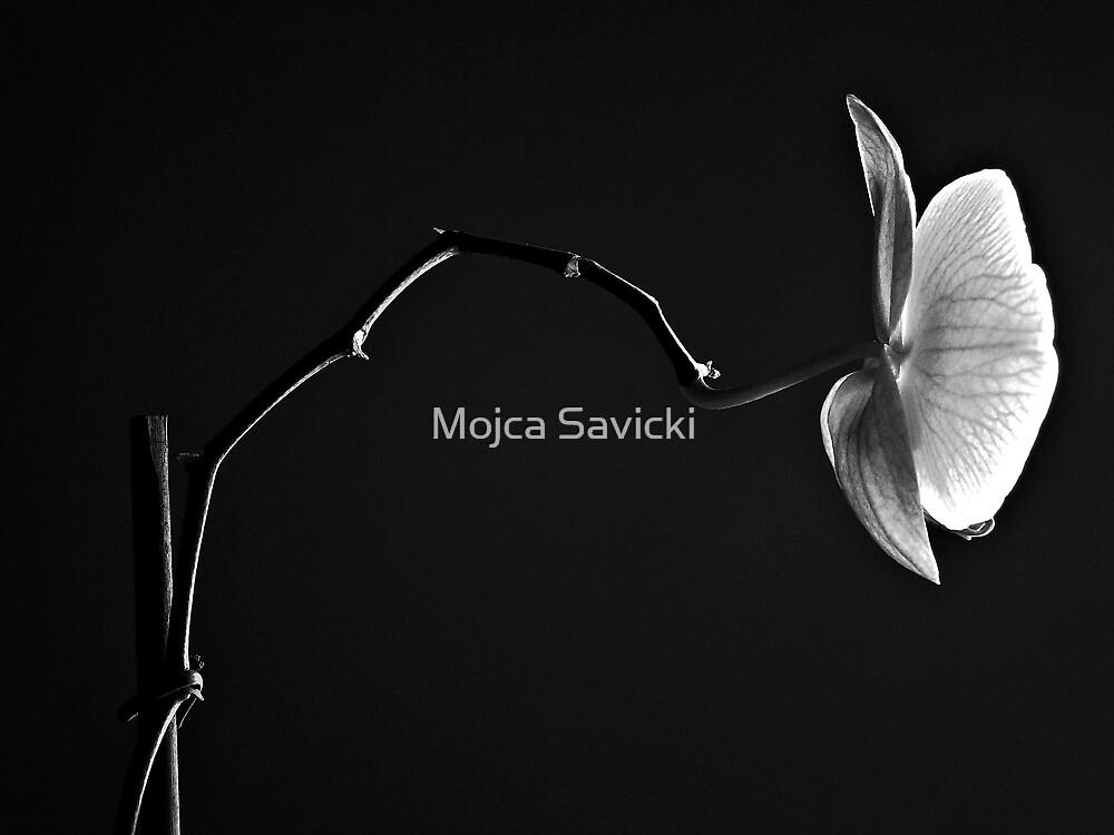 Just One Orchid by Mojca Savicki