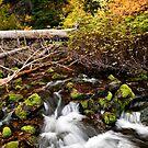 Mountain Stream in Autumn by Sam Scholes