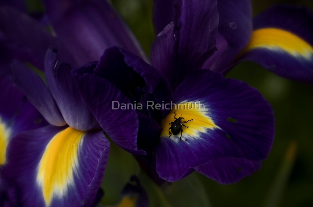 Gardens by Dania Reichmuth
