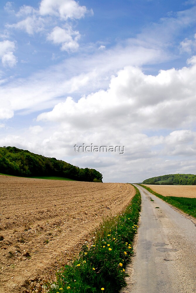 The fields of Vieux Rouen sur Bresle, France by triciamary