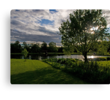 Sun In the Willow Canvas Print