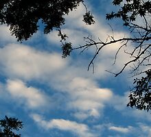 Deep Blue Sky by SBrown