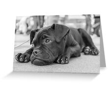 What am I doing here? Greeting Card