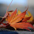 Leaf by CraftyThings